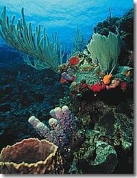 Belize Kayak Trips Itinerary 133
