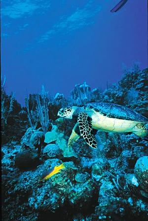 turtle 300