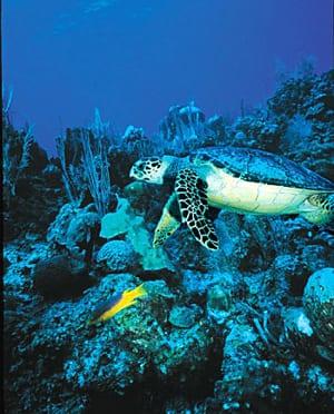 turtle 372