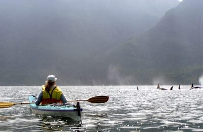 Kayaking with Orcas Trips 5