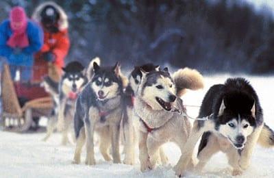 Dog Sledding Trip 19