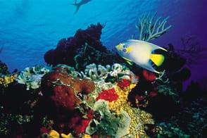 Tropical Fish1 Itinerary