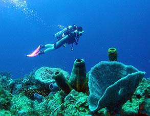 scuba-tube-sponge 3