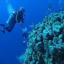 scubagroupweb 5
