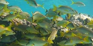 mre-reef-fish